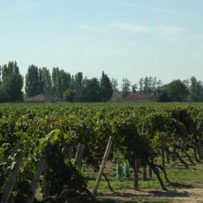Lalande-De-Pomerol