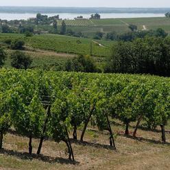 Côtes-De-Blaye