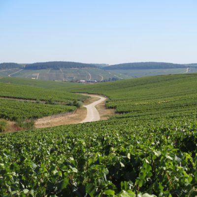 Chablis et Yonne