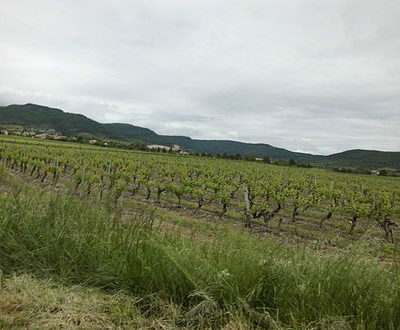 Coteaux-de-L'Ardèche