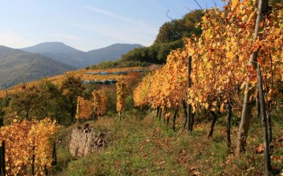 Le domaine Bott-Geyl, perle du vignoble alsacien :